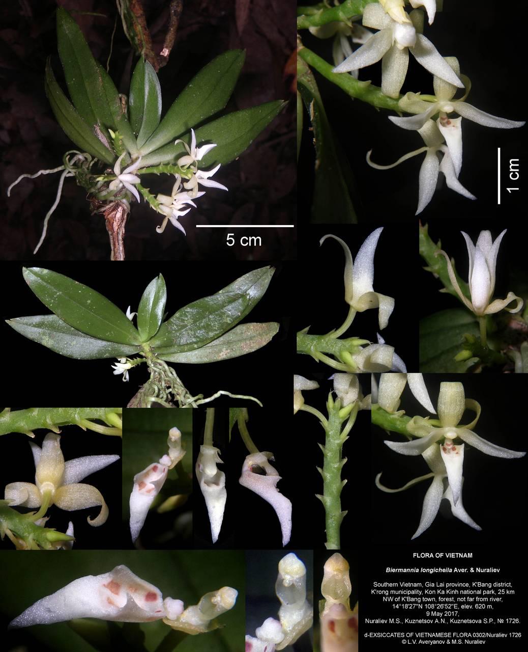 Ботаник из МГУ обнаружил во Вьетнаме новый вид орхидей